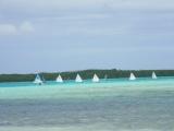 <h5>Sailboat Regatta Sorobon </h5><p></p>