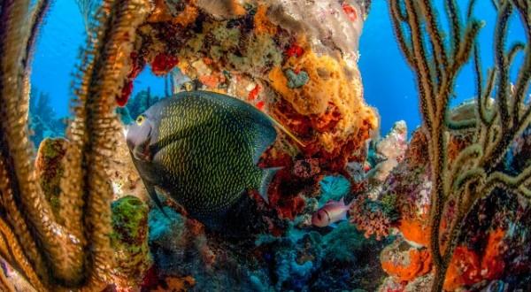 Scuba dive vacations Bonaire Caribbean