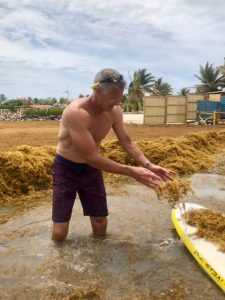 volunteer cleaning up after sargassum invasion sorobon bonaire