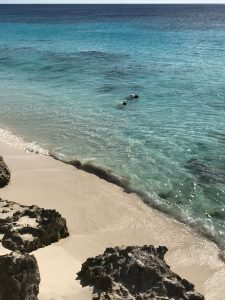 bachelors beach bonaire
