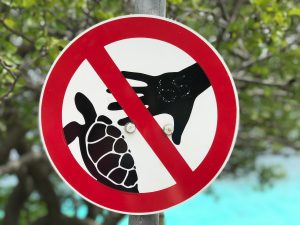 signs of bonaire do not touch the turtles