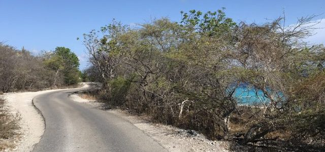 Running on Bonaire