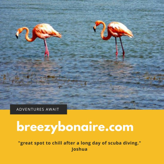 budget vacation rental bonaire