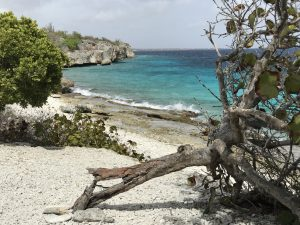 divi divi tree on bonaire at Tolo; off the beaten path Bonaire