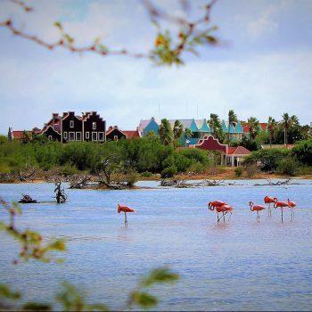 breezybonaire flamingos