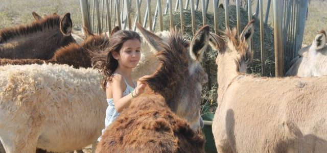donkey sanctuary bonaire things to do with kids